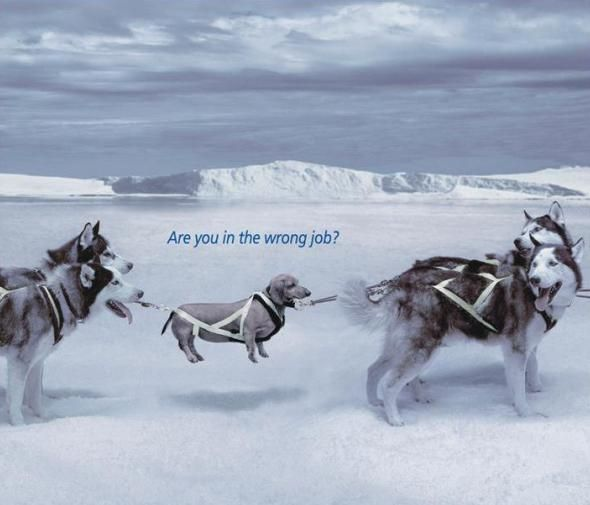 'Wrong Job' Ad Campaigns