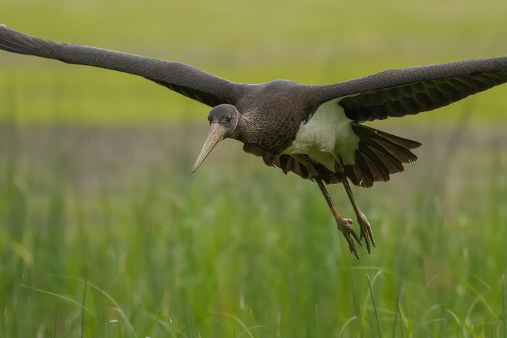 Aan het einde van de zomer begint de vogeltrek en zie je de eerste trekvogels al…