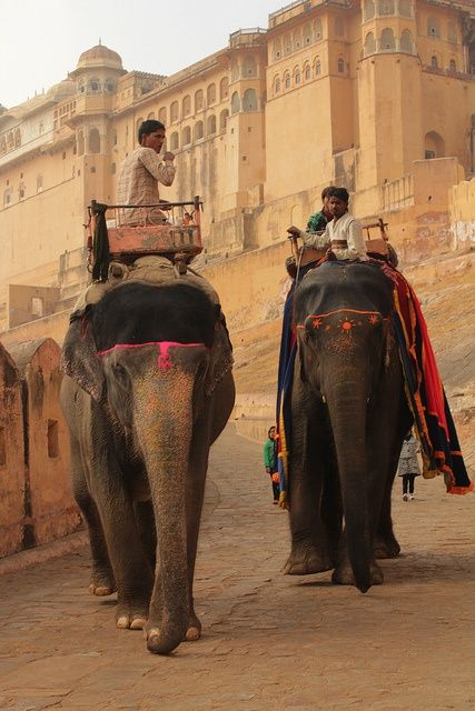 India - http://indiaincredible.tumblr.com/post/100597349428/india Elephant ride at Amer Jaipur Rajasthan