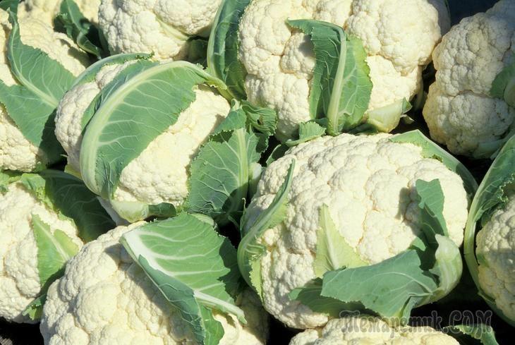 Полезные советы, чтобы вырастить цветную капусту в условиях открытого грунта
