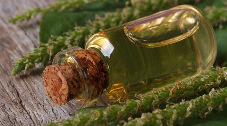 Jak vyrobit léčivý jitrocelový olej a hojivou mast