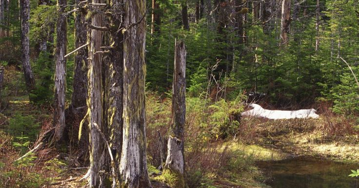 Lista de animais de florestas temperadas. As florestas temperadas abrangem muito menos área no planeta do que as florestas tropicais, e tem muito menos espécies . No entanto, as florestas temperadas são habitats importantes na costa noroeste da América do Norte e, em menor medida, de parte do Chile, Austrália, Nova Zelândia, Ásia e Europa. A floresta é definida pela sua precipitação ...