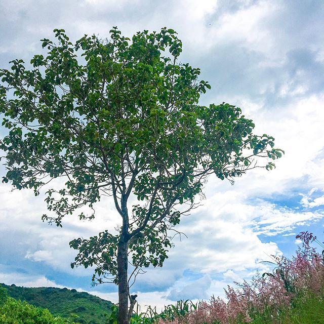 El Final De Todos Los Agostos Ultimo Dia De Agosto Sabado Arbol De La Esperanza Tree El Final De Todos Los Agostos Ult Landscape Outdoor Nature