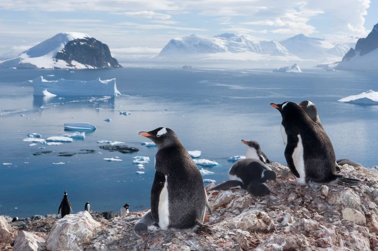 <p>From impossibly fuzzy chicks to superfast divers, see some of our favorite National Geographic pictures of penguins in action.</p>