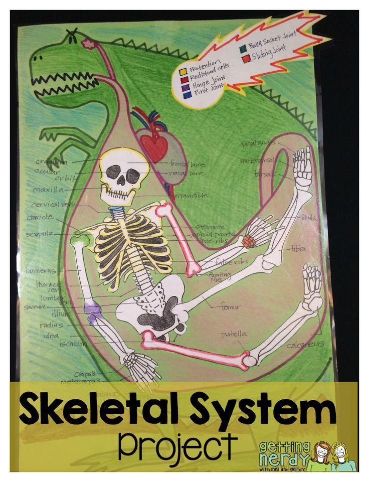 Lesson Plan Skeletal System Project Skeletal System Project Skeletal System Activities Human Body Activities