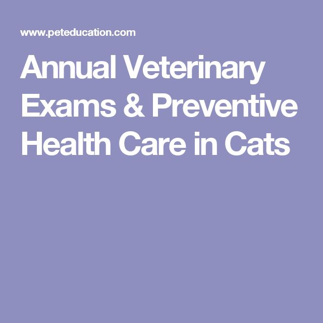 Annual Veterinary Exams & Preventive Health Care in Cats