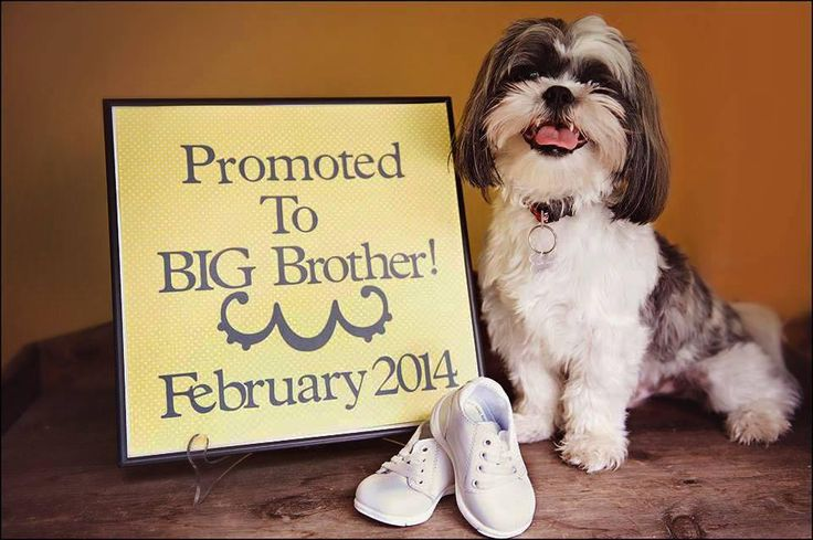 Our family is expanding: TODAY viewers share adorable pet-assisted announcements