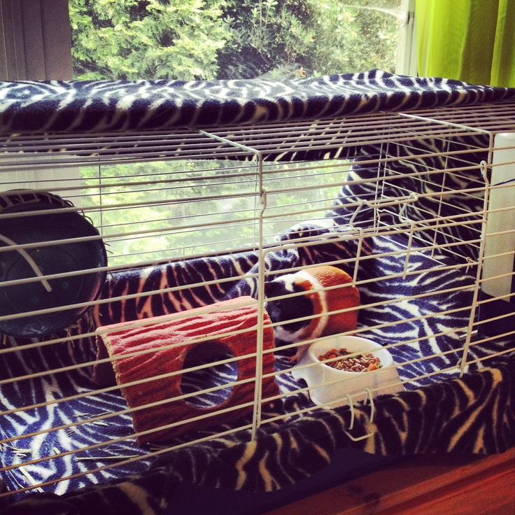 The 25 Best Cheap Guinea Pig Cages Ideas On Pinterest