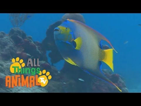 ▶ FISH | Animals for children. Kids videos. Kindergarten | Preschool learning - YouTube