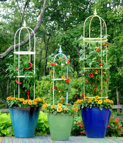 Cherry Tomato Plant Does Double Duty as a Design Element