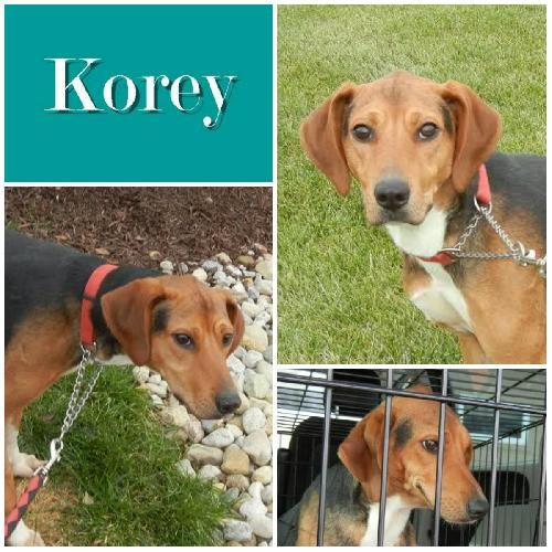 Fostered -Jan 2015 /Adopted -Apr 2015/Returned-Apr 2015
