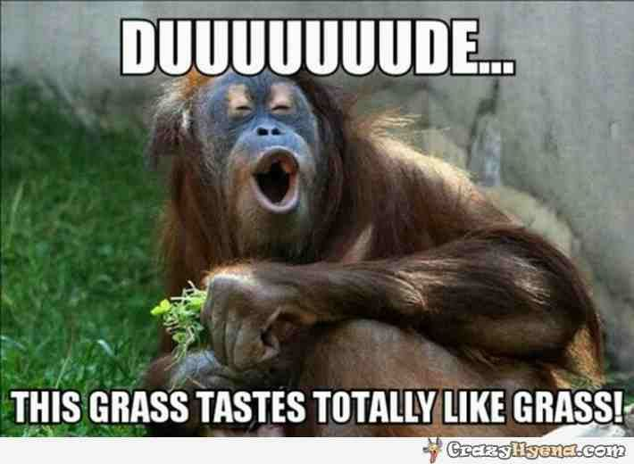20 Funny Monkey Memes You Ll Totally Fall In Love With Sayingimages Com Funny Monkey Memes Monkeys Funny Funny Monkey Pictures