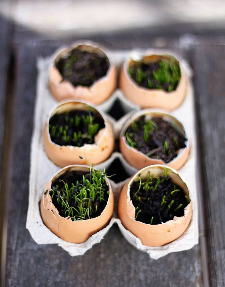 Start seeds in egg shells, which will give nutrients to your seedlings. Then they can be slightly crushed and planted outside in the spring. Great idea!