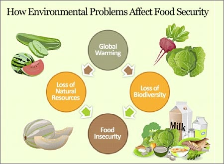 How Environmental Problems Affect Food Security