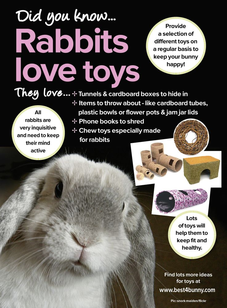 Rabbits love toys! For some great 'boredom buster' ideas visit http://best4bunny.com/bunny-care/boredom-busters/