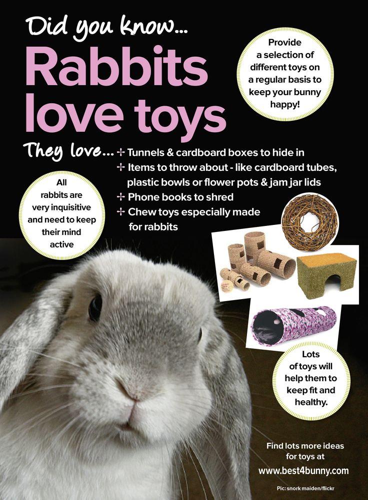 Rabbits love toys