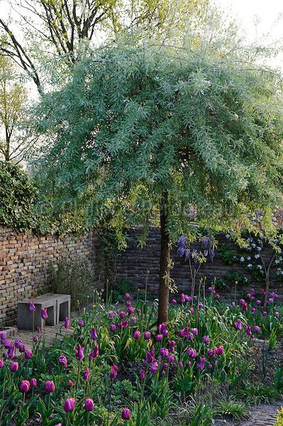 Landscaping With Pear Trees : Best trees images on