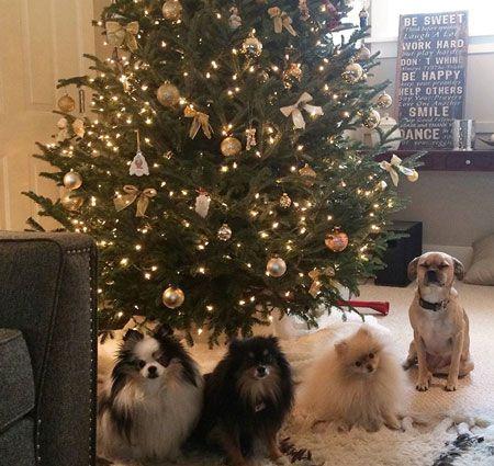 992 Best Woofipedia Images On Pinterest Doggies Dog
