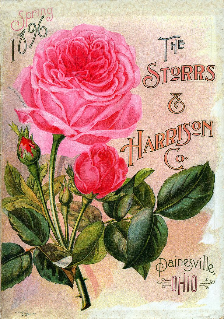 """Vintage Seed Catalog -  (retouched by Phyllis Fisher) The Storrs & Harrison Co 1896 Painesville, Ohio. It originally had a large blue """"X"""" towards the top and I was able to take that out."""