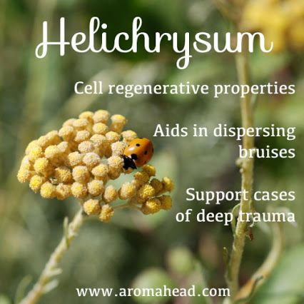 Summer is here, and we are enjoying the outdoors!  Great recipe for cuts and bruises using essential oils: http://www.aromahead.com/blog/2015/05/18/try-helichrysum-lavender-essential-oils-bruises/
