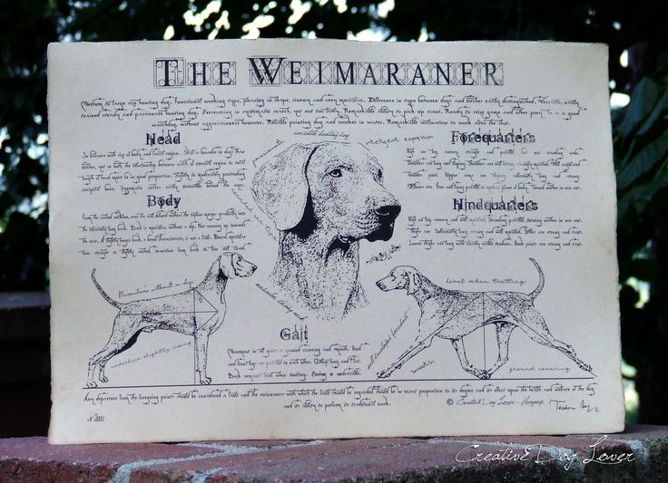 Antique styled dog standard - Weimaraner by Creativedoglover on Etsy