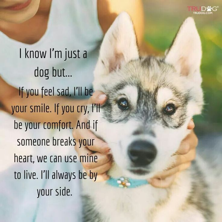 Husky Funny Quotes Cute Husky Puppies With Quotes Quotesgram