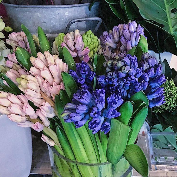 ヒアシンス 春ですね、、束で入荷するんですがなぜかいつも白色は少ないんですよ。これも後ろに隠れています、5本だけ。 開いてくると香ります、春の香り。 * #ヒアシンス#切花#生花#花のある生活#ボタニカル #ヒヤシンス #fleur #bouquet #花屋#ボンヴィヴァン#球根花#春の花