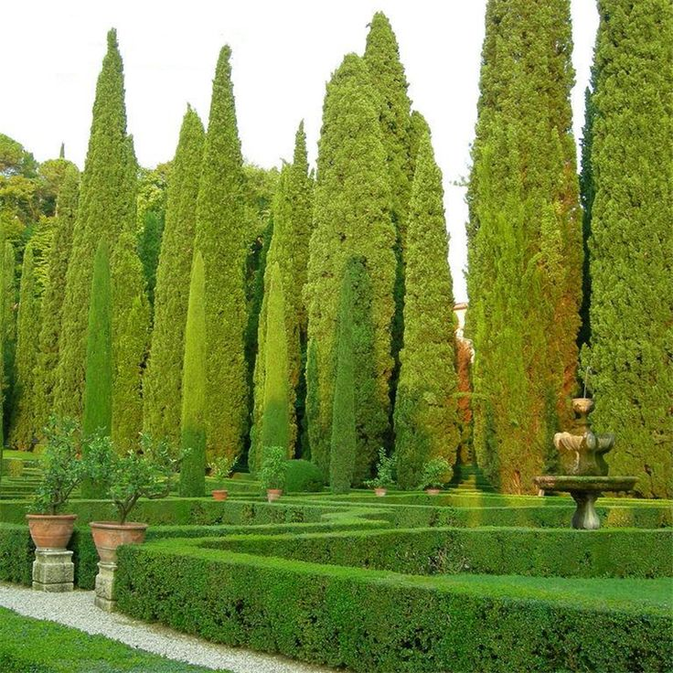 Tuscan House Style With Front Walkway And Italian Cypress: 17 Best Ideas About Cupressus Sempervirens On Pinterest