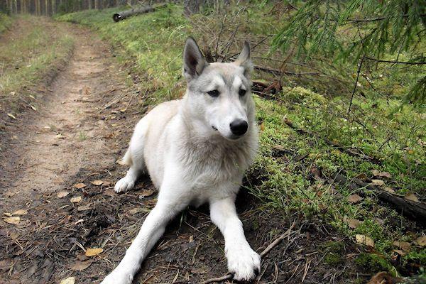 """Voorbijgangers hebben vanmiddag melding gemaakt van een hond die werd uitgelaten in een ijskoud bos. Het dier droeg geen enkele bescherming tegen de kou. De hond werd door verschillende wandelaars gezien in de bossen bij Ruurlo. """"Ik zag een man van een jaar of 40, een beetje kalend, die de hond uitliet. Tot mijn stomme verbazing was de hondhelemaal bloot"""", [...]"""