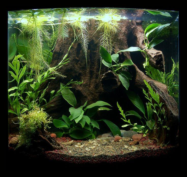 Die Besten Aquarien : die besten 25 aquarien ideen auf pinterest erstaunliche ~ Lizthompson.info Haus und Dekorationen