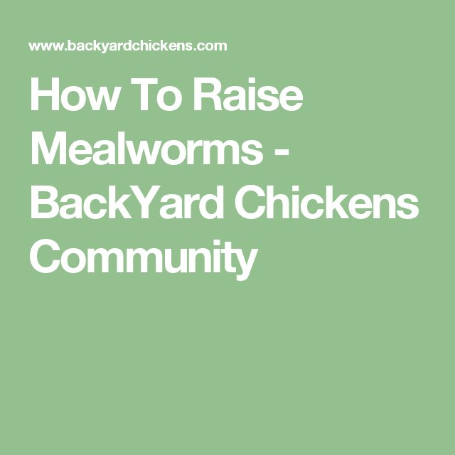 How To Raise Mealworms - BackYard Chickens Community