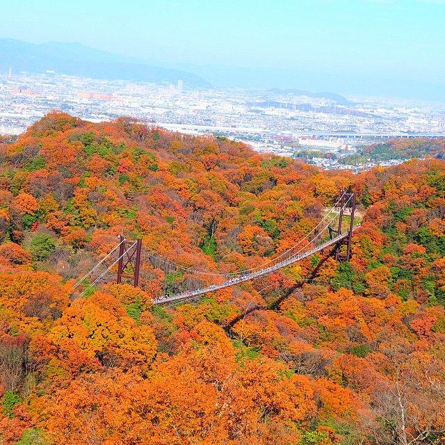 """一度訪れたら世界観が変わる!日本国内の""""絶景吊り橋""""10選 5枚目の画像"""