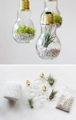 Reciclagem fofa: antigas lâmpadas deram espaço a estes pequenos ambientes verdes.