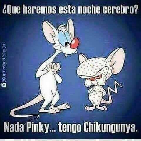 Qué Chigungunya