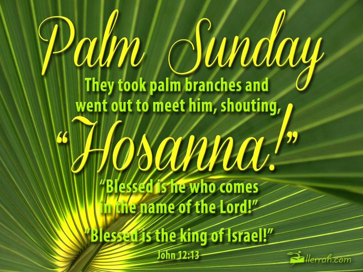 They took palm branches and went out to meet him, shouting Hosanna!.  Blessed is he who comes in the name of the Lord.