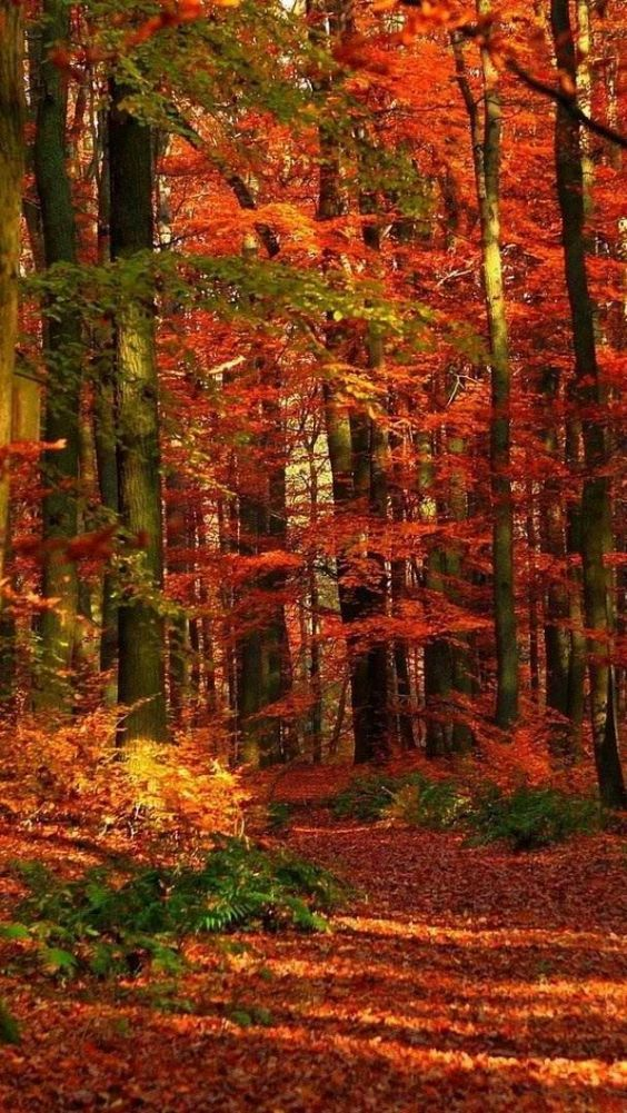 A photo of Trees aflame in a brilliance of color.