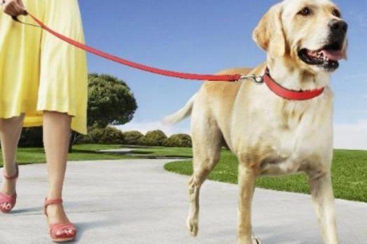 Crean #app para denunciar heces de perro abandonadas