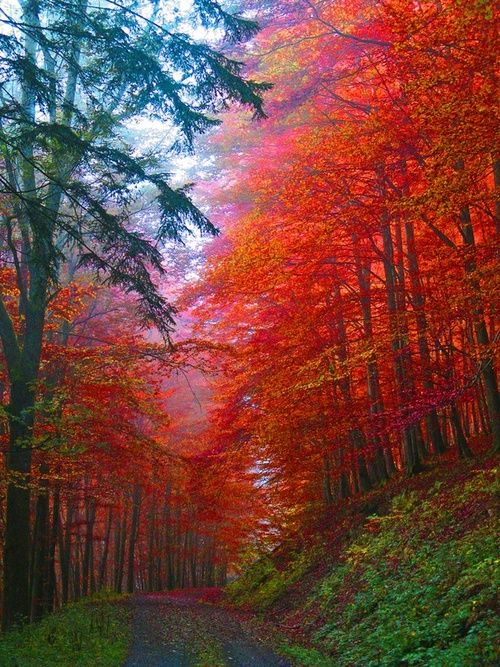 Autumn Forest, Saxony, Germany  photo via destinyNature, Autumn Leaves, Autumn Forests, Colors, Beautiful, Trees, Germany, Places, Roads