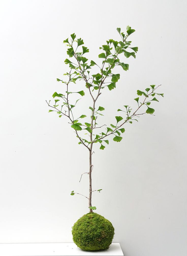 17 best images about kokedamas paris les jardins suspendus d 39 ikebanart on pinterest. Black Bedroom Furniture Sets. Home Design Ideas