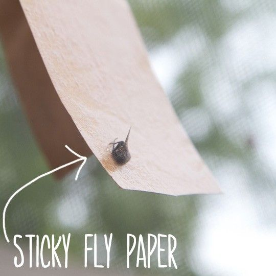 Having flies in the warmer months is a constant battle. No matter what kind of fly you have-be it fruit flies, house flies, or any of the other 16,000 kinds (in North America alone)-they make their surroundings seem unclean and unpleasant. They buzz around your head, knock against windows, march...