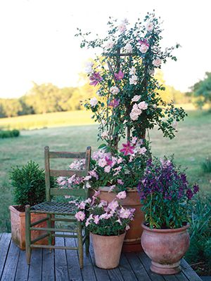 46 best images about p allen smith on pinterest gardens raised beds and yard decorations - P allen smith container gardens ...
