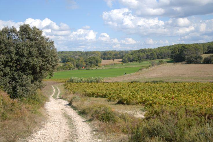Provence...