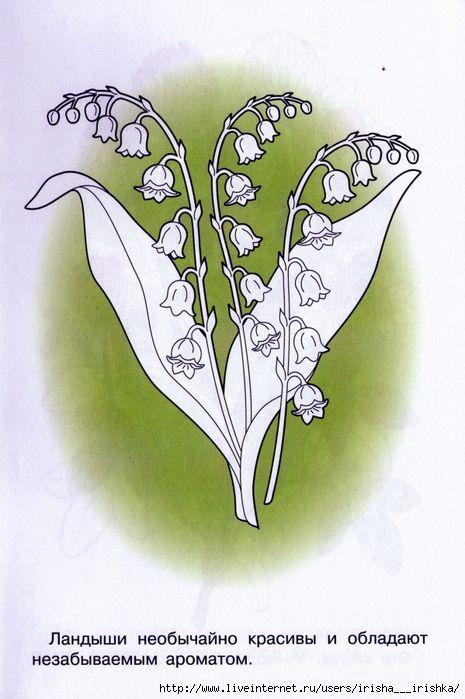 """Раскраска """"Лесные и полевые цветы"""". Обсуждение на ..."""