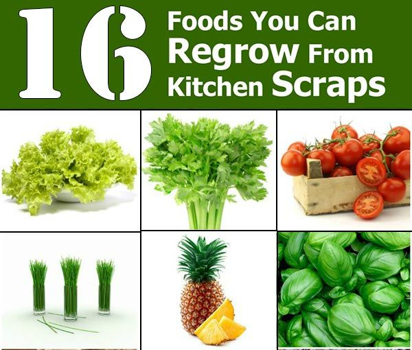 10 Vegetables You Can Regrow Yourself From Kitchen Scraps: 1112 Best Gardening And Backyard Images On Pinterest