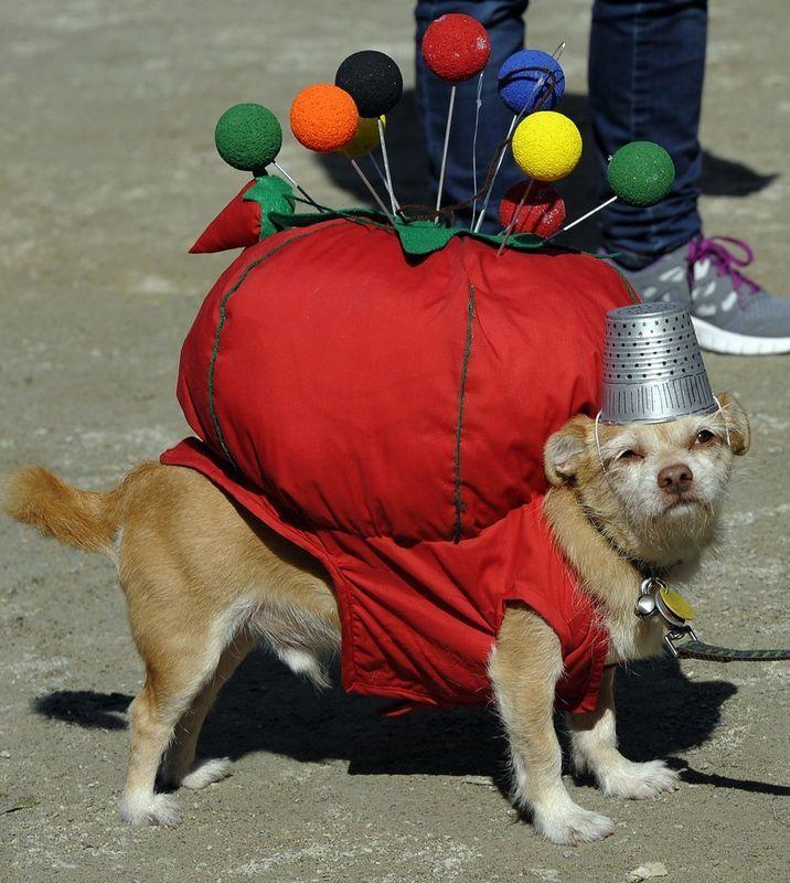dog-halloween-costume-pin-cushion  The best doggie costumes!