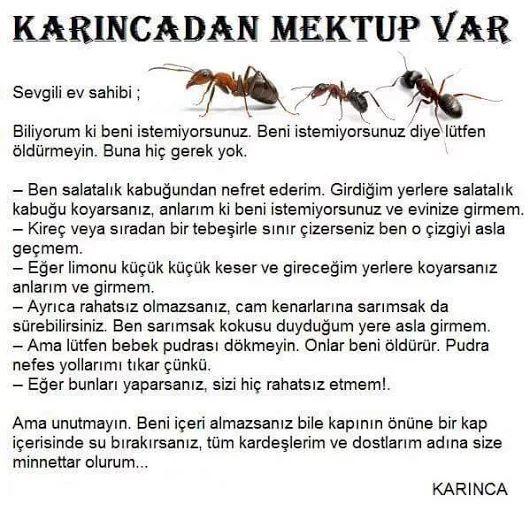 Karıncalardan mektup var dinleyin...