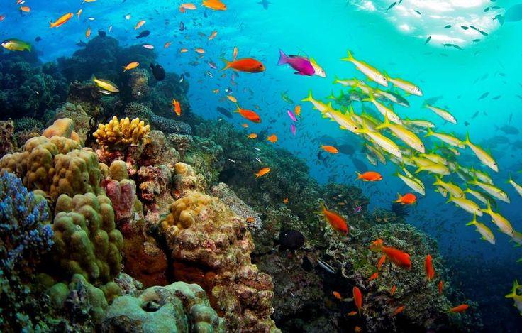"""Lo sapevi che...""""La Grande Barriera Corallina, uno sfavillìo di colori."""" a cura di Michela Lagnena - http://www.vivicasagiove.it/notizie/lo-sapevi-la-grande-barriera-corallina-uno-sfavillio-colori/"""
