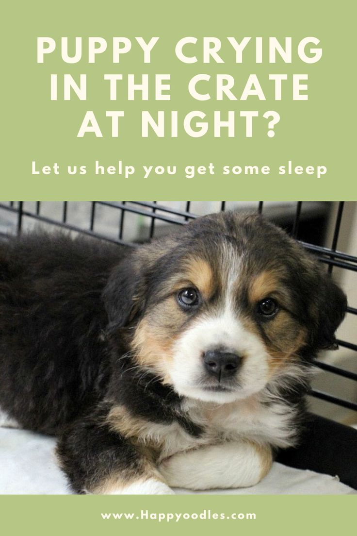 Puppy Crying In The Crate At Night How To Help Them Sleep Happy Oodles In 2020 Kennel Training A Puppy Crate Training Puppy Puppy Kennel