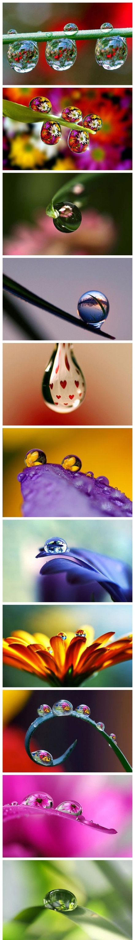 Beauty through the water drops