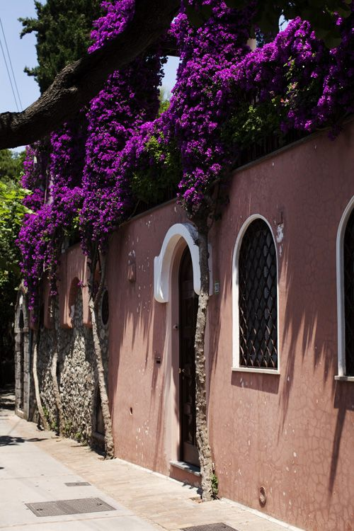 bougainvillea flow: Purple Capri, Ads Anacapri, Color, Flowers Vines, Purple Flowers, Beautiful Places, Wall Flowers, Capri Italy, Dreams Destinations